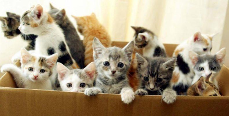 Детеныши в коробке