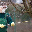 Как защитить плодовые деревья и кустарники в саду от болезней и вредителей