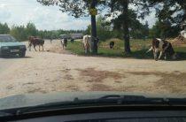 Скот личный — проблема общая
