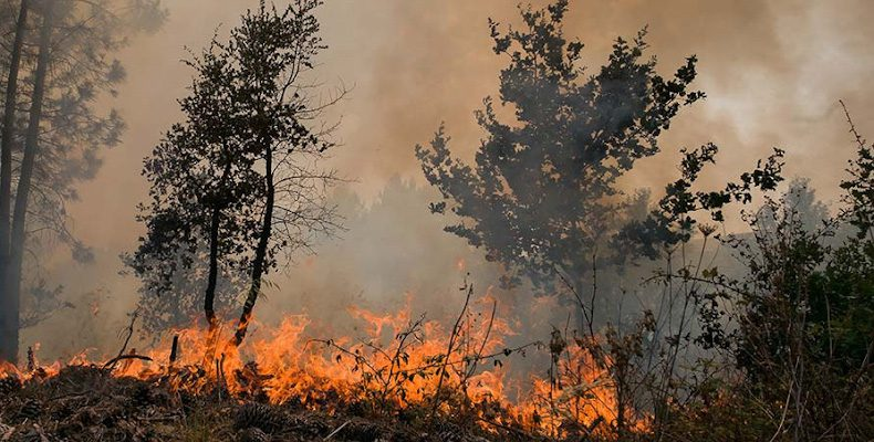 Не допустить природных пожаров